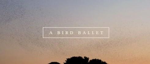 A Bird Ballet de Neel Castillon